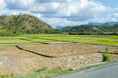 Typical Landscapes of Madagascar Royalty Free Stock Photo