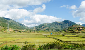Typical Landscapes of Madagascar Stock Photography