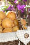 Typical ligurian apricots Stock Image