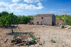 Typical Majorca farm view Royalty Free Stock Image