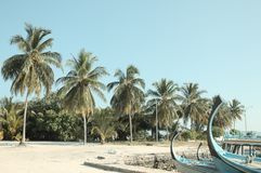 Typical maldivian boats called `Dhoni` in the harbor with palms background stock images