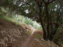 Typical Mediterranean forest on the hills. Great nature hiking area Royalty Free Stock Photography
