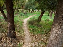Typical Mediterranean forest on the hills. Great nature hiking area Royalty Free Stock Image
