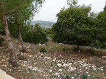 Typical Mediterranean forest on the hills. Great nature hiking area Stock Photography