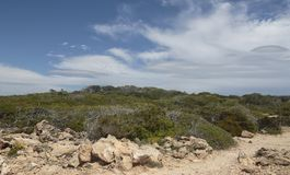Mediterranean vegetation in the island of mallorca. Typical mediterranean low vegetation and cumulus clouds near the sand coast in Son Baulo, north side of the Stock Photo