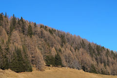 Typical mountain landscape in the Dolomites in Italy,Europe Stock Photography