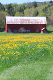 Typical new england landscape. With red barn and yellow flowers royalty free stock photos
