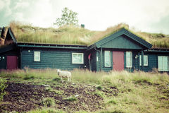 Typical norwegian house with grass on the roof Stock Image