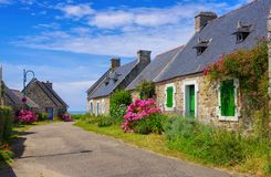 Typical old house and hydrangea flower in Brittany. France Stock Photo