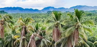 A typical Philippines landscape of Coconut Palms and Mountains. A typical Filipino landscape of coconut palms and mountain ranges on the island of Siargao in the royalty free stock photos