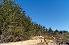 Typical pine forest in the Nelson Region of New Zealand stock photography