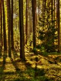 Typical polish forest Royalty Free Stock Image
