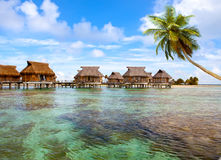Typical Polynesian landscape-seacoast with palm Royalty Free Stock Image