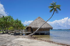 Typical Polynesian traditional housing Fare Potee. Typical construction Polynesian traditional housing Fare Potee on the shore of the lake Fauna Nui, Maeva Royalty Free Stock Photography