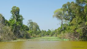 Typical pond on a hot dry season. Cambodia. Video 1080p - Typical pond on a hot dry season. Cambodia stock footage