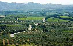 Typical Provence landscape with olive gardens Royalty Free Stock Photography