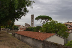 Typical red roofes with stone pine and San Frediano church belfry on background. Lucca. Italy. stock photo