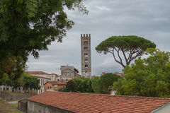 Typical red roofes with stone pine and San Frediano church belfry on background. Lucca. Italy. Royalty Free Stock Photography