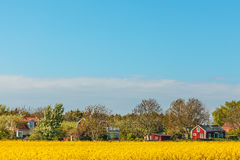 Typical red Swedish houses in summer with blooming coleseed Stock Photography