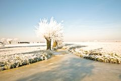 Typical rural dutch landscape in winter Royalty Free Stock Images
