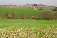 Typical rural landscape of marche region Stock Photo