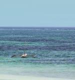 Typical sailing boat. In kenya,diani beach Stock Photos