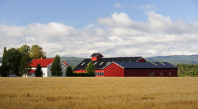 A typical Scandinavian farm stock image