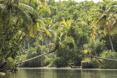 Typical Serene River Stream amid coconut palms stock photos