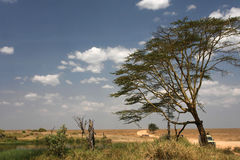 A typical serengeti landscape Royalty Free Stock Photo