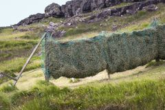 The hay of the mown meadows is well dried Royalty Free Stock Photos