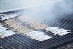 Typical spanish, grilled sardines cooked in a grill fire. Typical spanish, grilled sardines cooked in a grill fire with hot coals. Shallow depth of field, focus Royalty Free Stock Photos