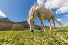 Typical Spanish horse in a farmland ancient village Hostales den Bas in Catalonia of Spain.  Royalty Free Stock Photos