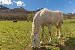 Typical Spanish horse in a farmland ancient village Hostales den Bas in Catalonia of Spain.  Stock Photography