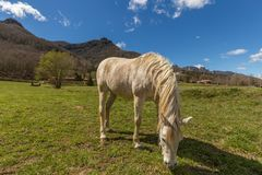 Typical Spanish horse in a farmland ancient village Hostales den Bas in Catalonia of Spain.  Royalty Free Stock Image