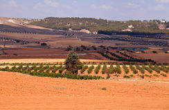 Typical Spanish rural landscape Royalty Free Stock Photography