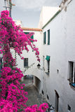 Typical street in Cadaques Royalty Free Stock Images