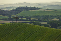 Typical summer landscape Royalty Free Stock Image