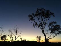 Sunrise Silhouette. A typical sunrise with a golden  in South Australia, with a silhouette of the eucalyptus trees Stock Images