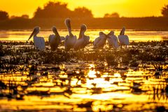 Typical sunset in the Danube Delta Romania. Wildlife birds and birdwatching photography in the Danube Delta, Eastern Europe, Romania royalty free stock images