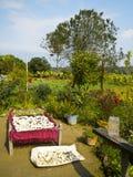 Typical tharu garden at Bardia, Nepal Stock Photos
