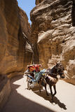 Typical tourist transport in Petra Royalty Free Stock Photos