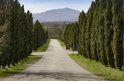 Typical tree-lined avenue with cypress trees in Tuscany. Italy royalty free stock photography