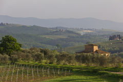 Typical Tuscan farmhouse with vineyard and olive trees Royalty Free Stock Images
