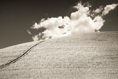 Typical Tuscan hill against a cloudy sky in sepia toned.  Royalty Free Stock Image