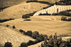 Typical Tuscan landscape Stock Image