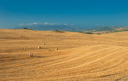 Typical tuscan landscape. Image of typical tuscan landscape Royalty Free Stock Image
