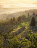 Typical Tuscan landscape. Fog and typical Tuscan landscape - a view of a villa on a hill, a cypress alley and a valley with vineyards, province of Siena. Tuscany Stock Images