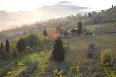 Typical Tuscan landscape. Fog and typical Tuscan landscape - a view of a villa on a hill, a cypress alley and a valley with vineyards, province of Siena. Tuscany Royalty Free Stock Photos