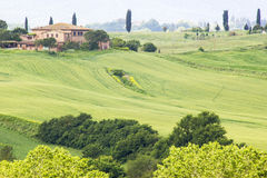 typical  tuscan landscape in spring Royalty Free Stock Images