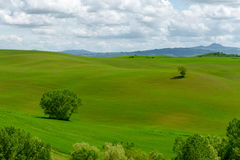 Typical Tuscan views. Of farms, fields, vineyards Stock Photography